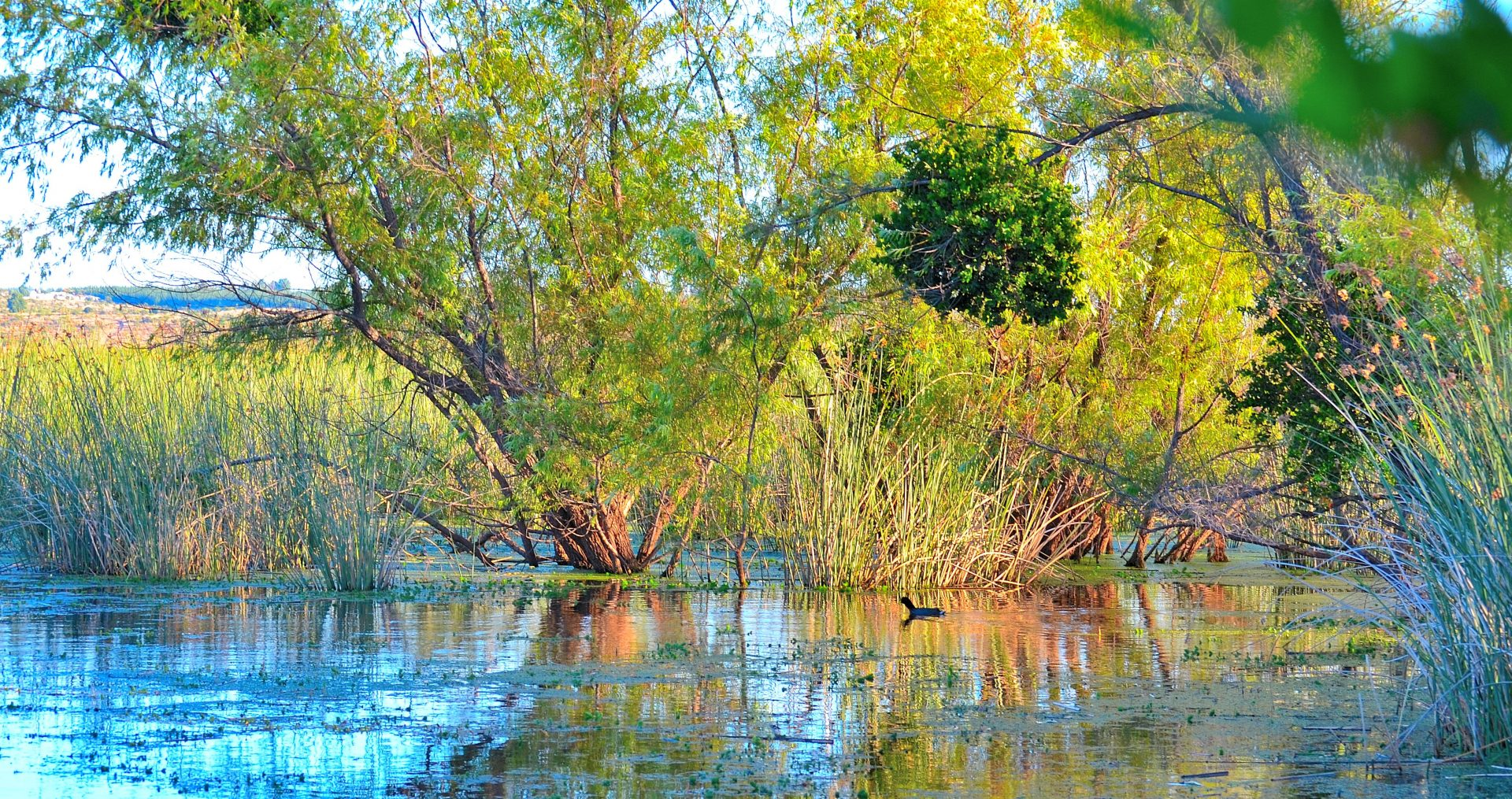 ecosistema hídrico