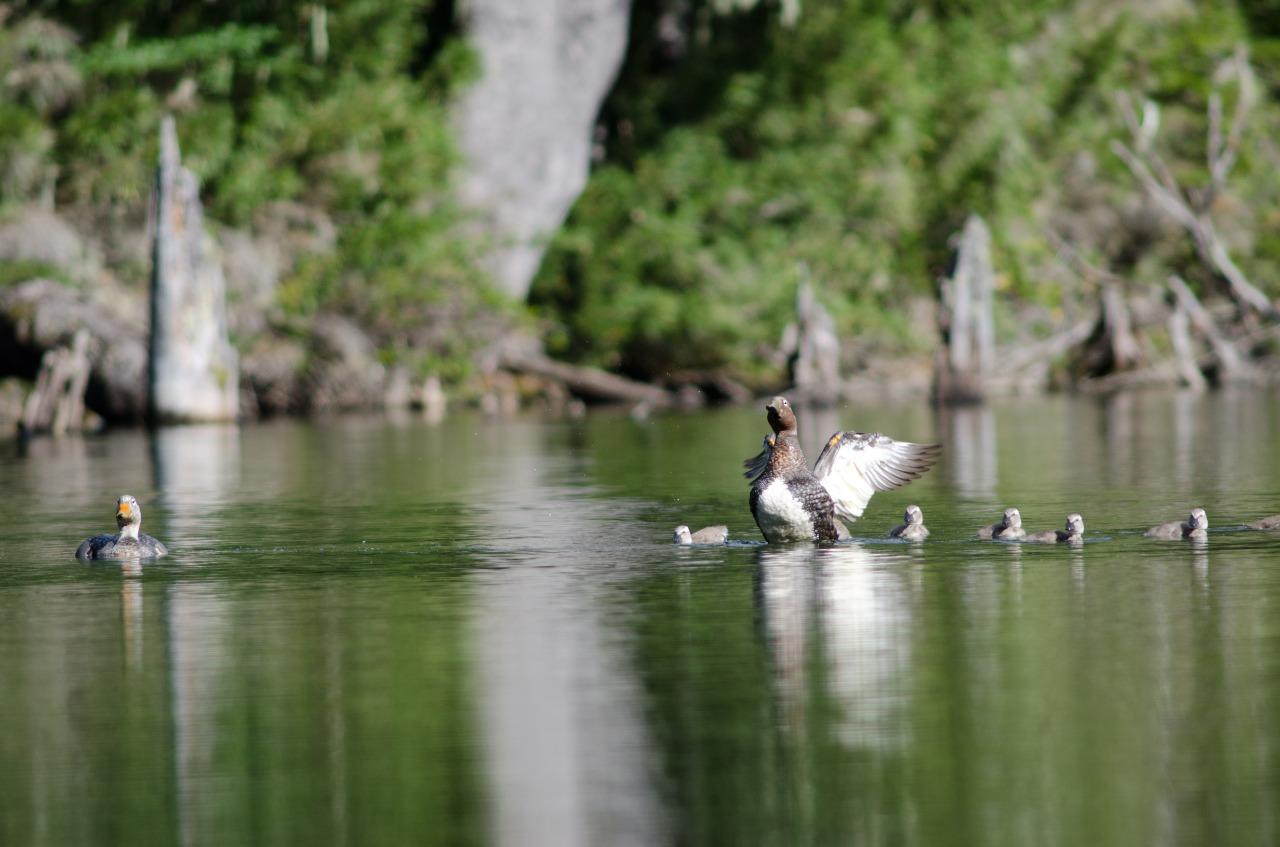 ave en el agua